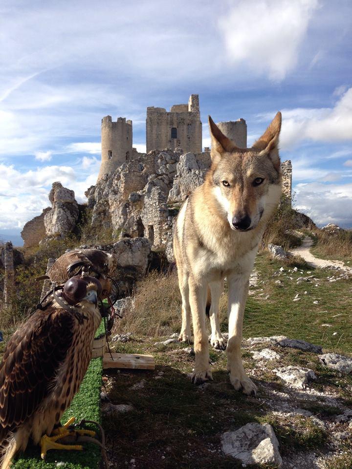 rocca calascio wolf