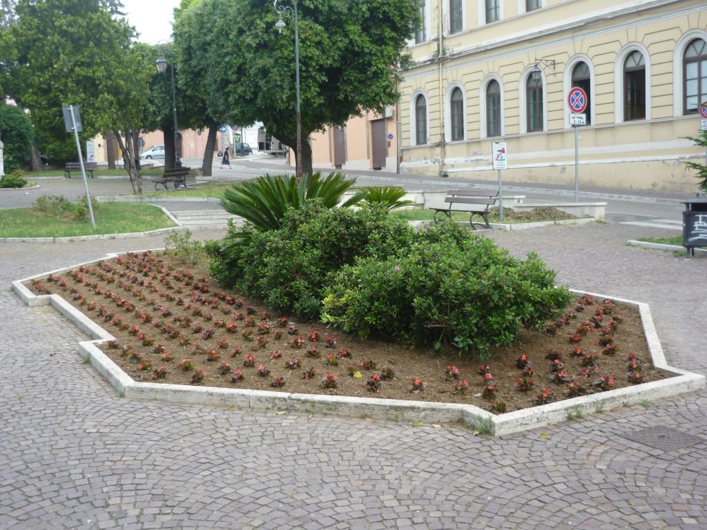 le petunie in piazza della Libertà