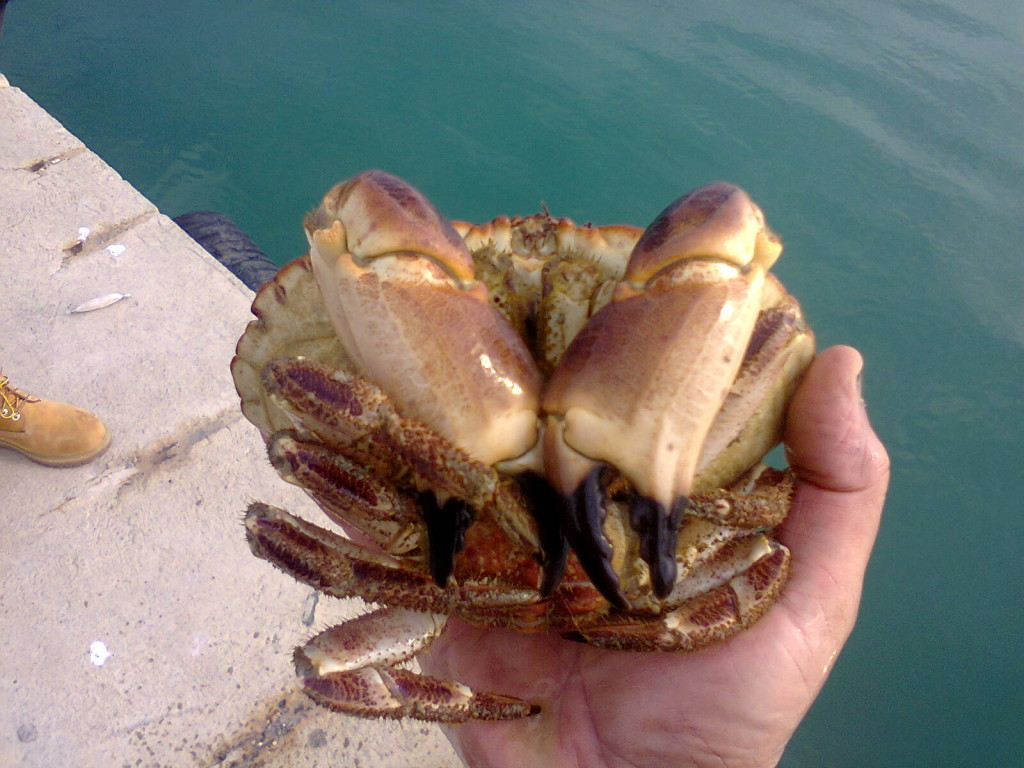 Giulianova. Un nuovo ospite nel mare giuliese.