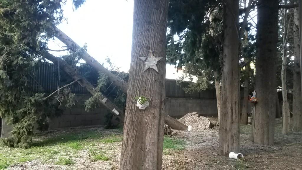 ITALIA NOSTRA GIULIANOVA PER LA TUTELA DEL PARCO DELLE RIMEMBRANZE A CENTO ANNI DALLA GRANDE GUERRA