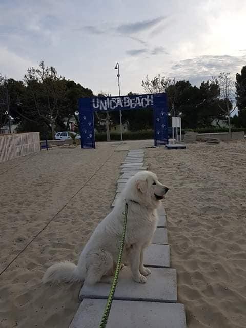 Giulianova. Conferenza stampa e riapertura di UNICA BEACH – spiaggia x cani