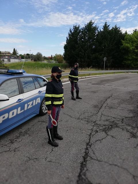 Abruzzo e Molise. Polizia stradale: dal 2019 sono 161 gli incidenti causati da investimento di animali.