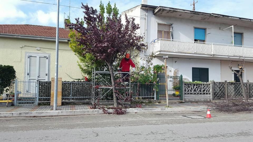potatura-alberi-1