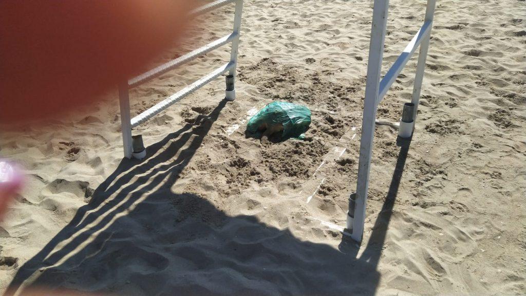 Giulianova. Sarà rimossa la carcassa della tartaruga marina.